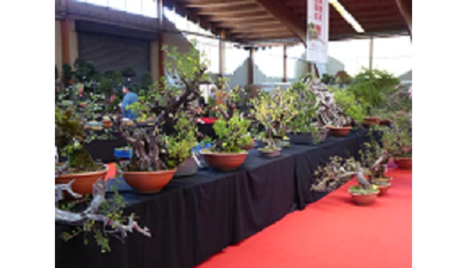Saulieu European Bonsai Show