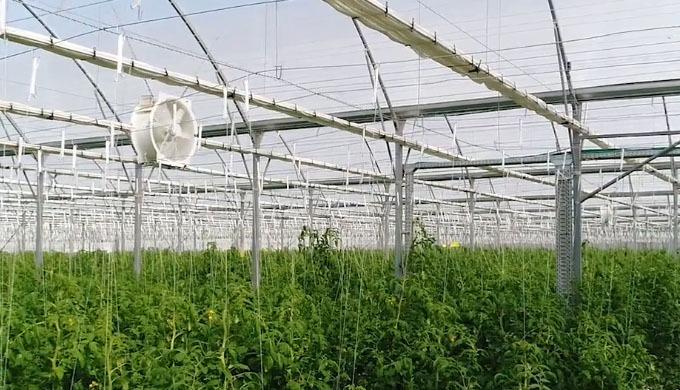 Netafim™ Greenhouse, l'un des principaux fournisseurs mondiaux de soluti ons de serres, a acquis une...