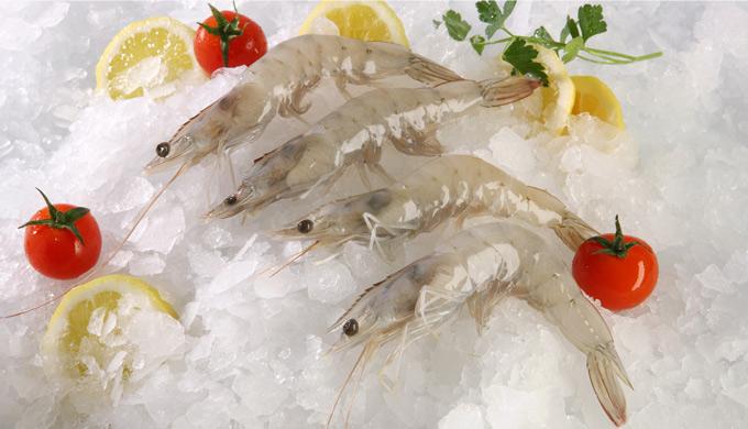 Shrimp Vannamei