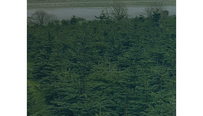 Har Dunne is the best in Irish Christmas trees. They are expert growers who offer high-quality, prof...