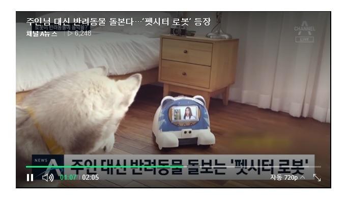 pet-sitter robot