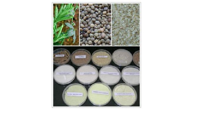 Natural gums : Guar – Plant, Seeds, Splits, Powders