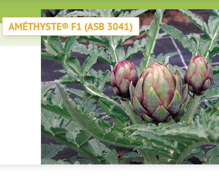 Graines Voltz, fournisseurs de semences et jeunes plants de fleurs et de légumes pour professionnels...