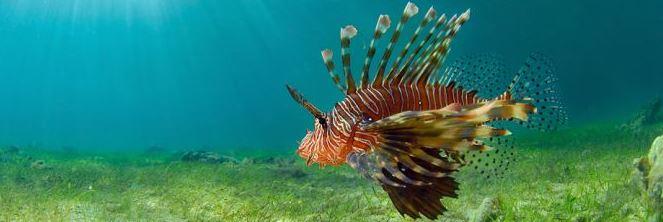 SEANEO, conseils en environnement littoral et en océanographie, vous présente l'outil pour l'analyse...