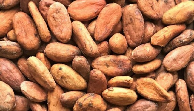 Cocoa is the key ingredient in chocolate confections, candy bars, boxed or bulk chocolates, many typ...