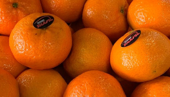 Greek A class Mandarins Clementine variety. Sweet, juicy and with the right firmness Your customers ...