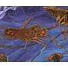 Nous vous proposons une gamme des plus complète de crustacés vivant et frais :tourteaux, araignées, ...